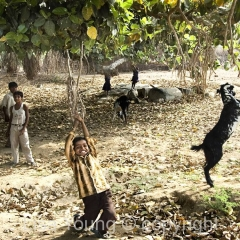 Kids playing, Poshina, India