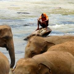 Pinawella Elephant Orphanage, Sri Lanka