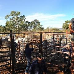 Stockyard, Kimberley, Australia
