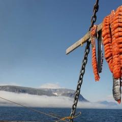 Drying Arctic Char, Labrador, Canada