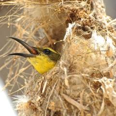 Nesting bird, Lizard Island, Australia